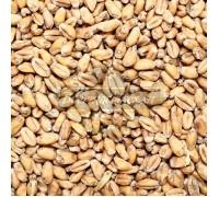 Солод Курский пшеничный светлый, 1 кг